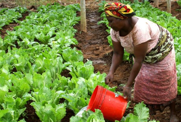 Tilting Trade Towards Africa: Becoming The World's Food Basket